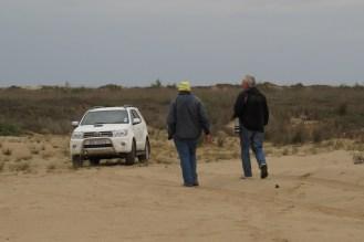 Searching for the Dune Lark