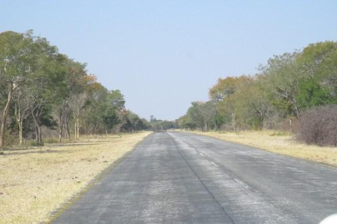 Main Caprivi Road - typical habitat.