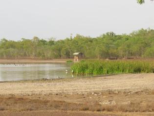 Bird Billabong - Mary River