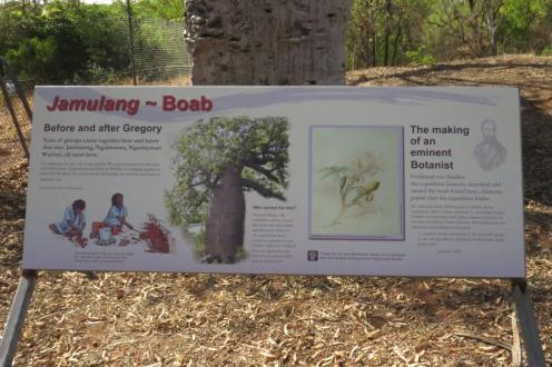 Gregory's Baobab Tree, Timber Creek
