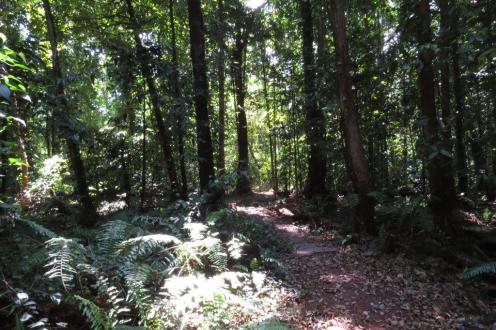 Holmes Jungle NR