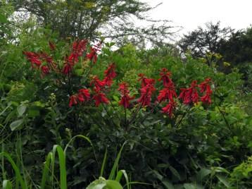 Springside Blooms