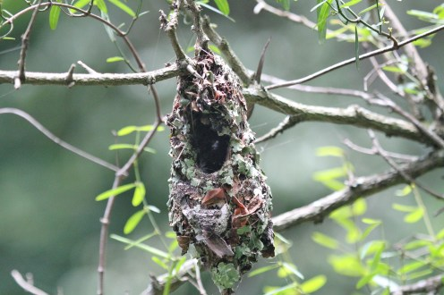 Sunbird Nest - but which one - reach for your books