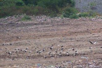 White Storks - how many?