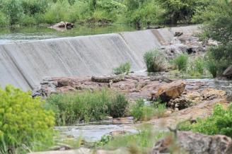 Crocodile - large 4 metres+