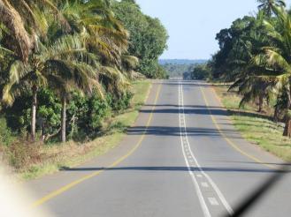 Palm tree highways.