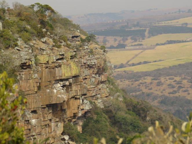 Vulture nesting sites
