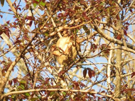 Strange Moth's nest.