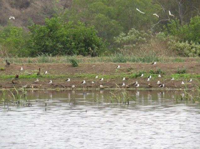 Birds in Motion over the ponds - Sally Bartho