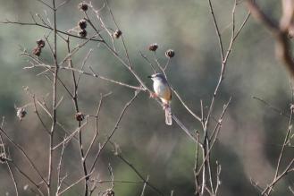 Mystery Bird -TFP