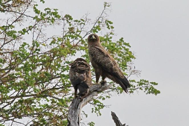 Wahlberg's Eagles on arrival.