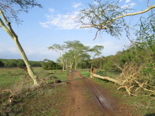 Nyamithi Banzi Road