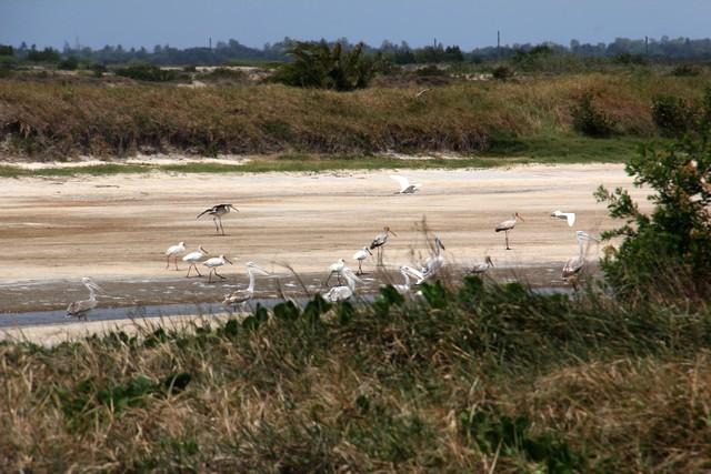 Near Prawn farm in Rio Savane