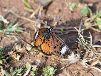 Butterfly_D717813