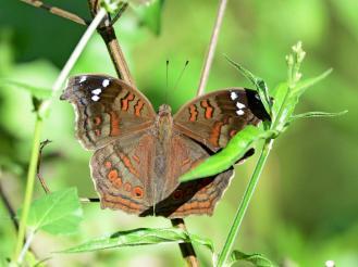 Butterfly_D717823