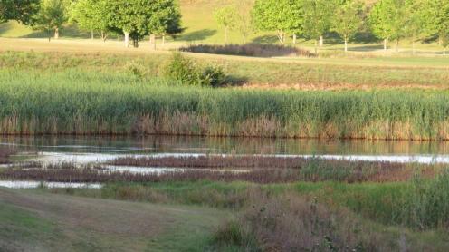 Large wetland area