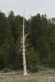 Spray coated tree