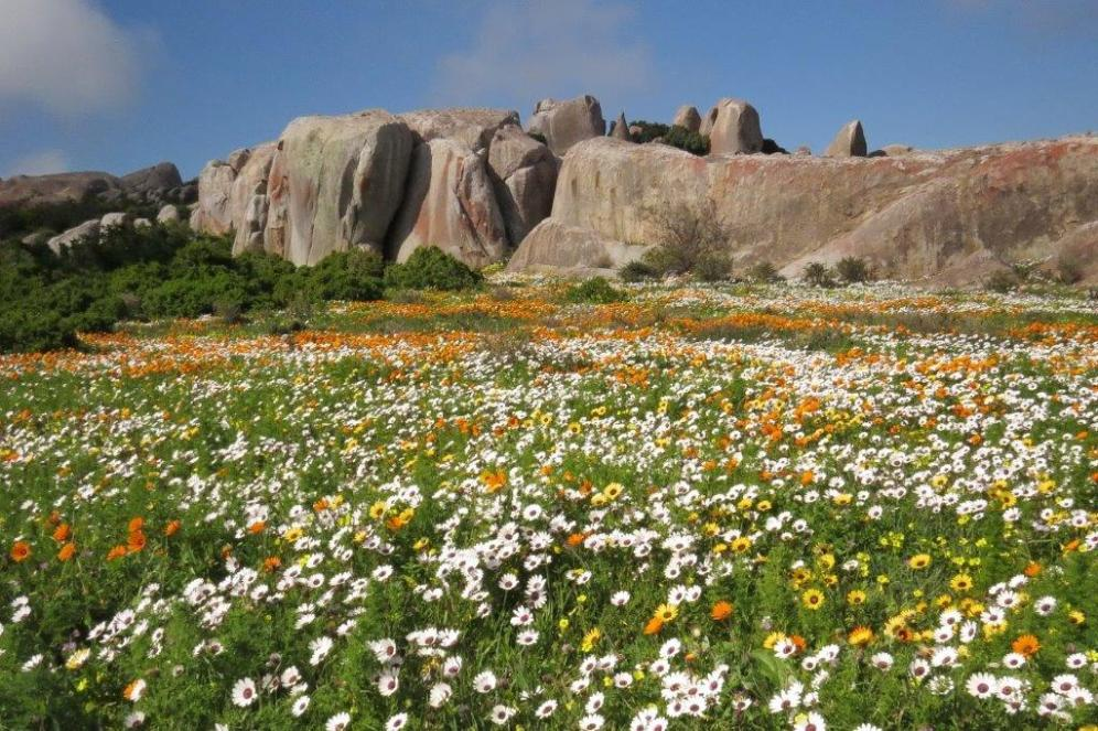 Rocks and flowers a