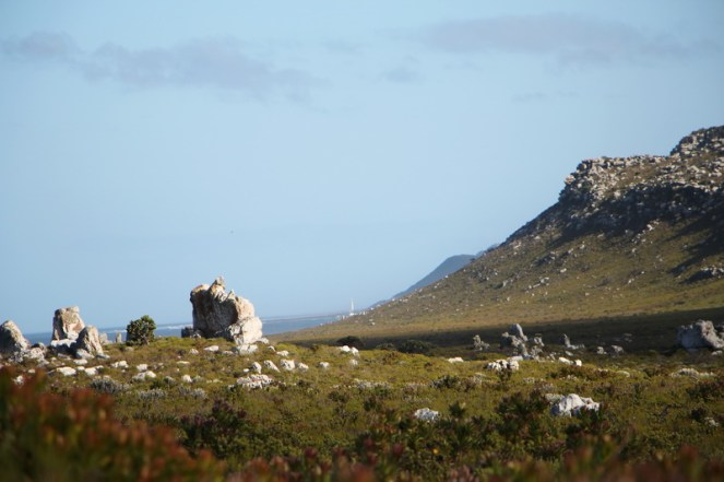 Table Mountain NR 1_resize