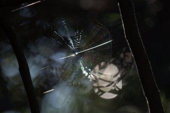 CD Disc - AKA spider web
