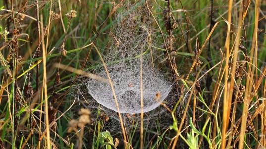 Web - Mick Jackson