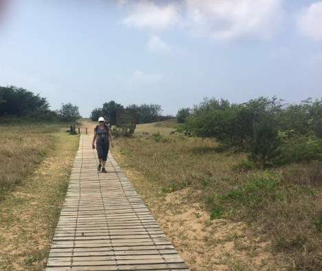 End of the boardwalk to the sea - no more Casuarinas