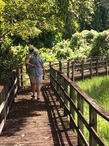 Boardwalk at Royal Palm Reserve