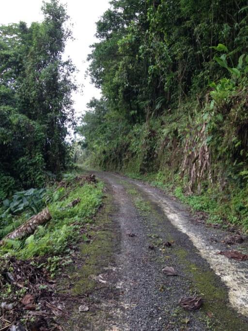 Ecclesdown road in the John Crow Mountains