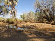 Banks of the Kunene River