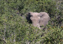 Elephant on a mission