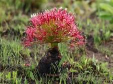 Flowering Plant - Mick Jackson