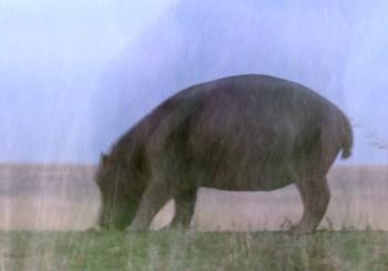 Mystical Hippo