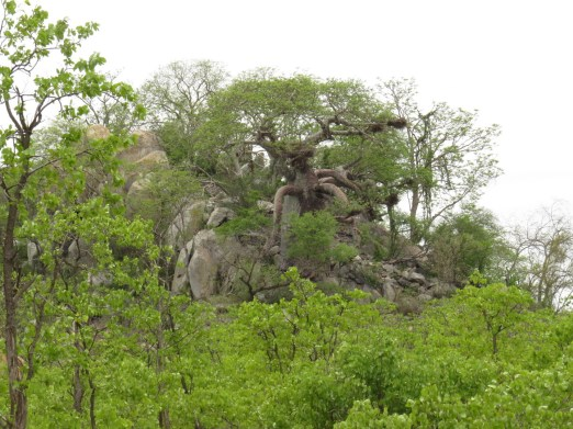 Baobab it is reaching for you