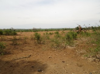 Barren and Dry