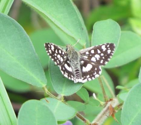 Butterfly - Forest Sandman - Sandi du Preez