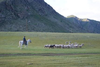 Taking the sheep home.