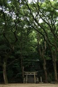 Torii amid trees.
