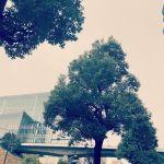 【Instagram】最近天気が悪いですね....春雨ですかね