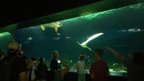 ウミガメやサメのいる大型水槽