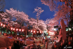 """Ohanami"" is very popular outside party with viewing cherry blossom.  © Y.Shimizu/© JNTO"