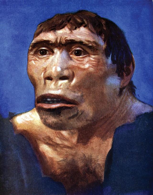 Penemu Pithecanthropus Erectus : penemu, pithecanthropus, erectus, Pithecanthropus, Erectus:, Penemuan, Fosil, Purba, Perbedaannya, Kumparan.com