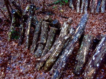 Stacked Logs for Shitake Mushrooms