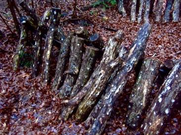 Stacked Logs for Shitake Mushrooms