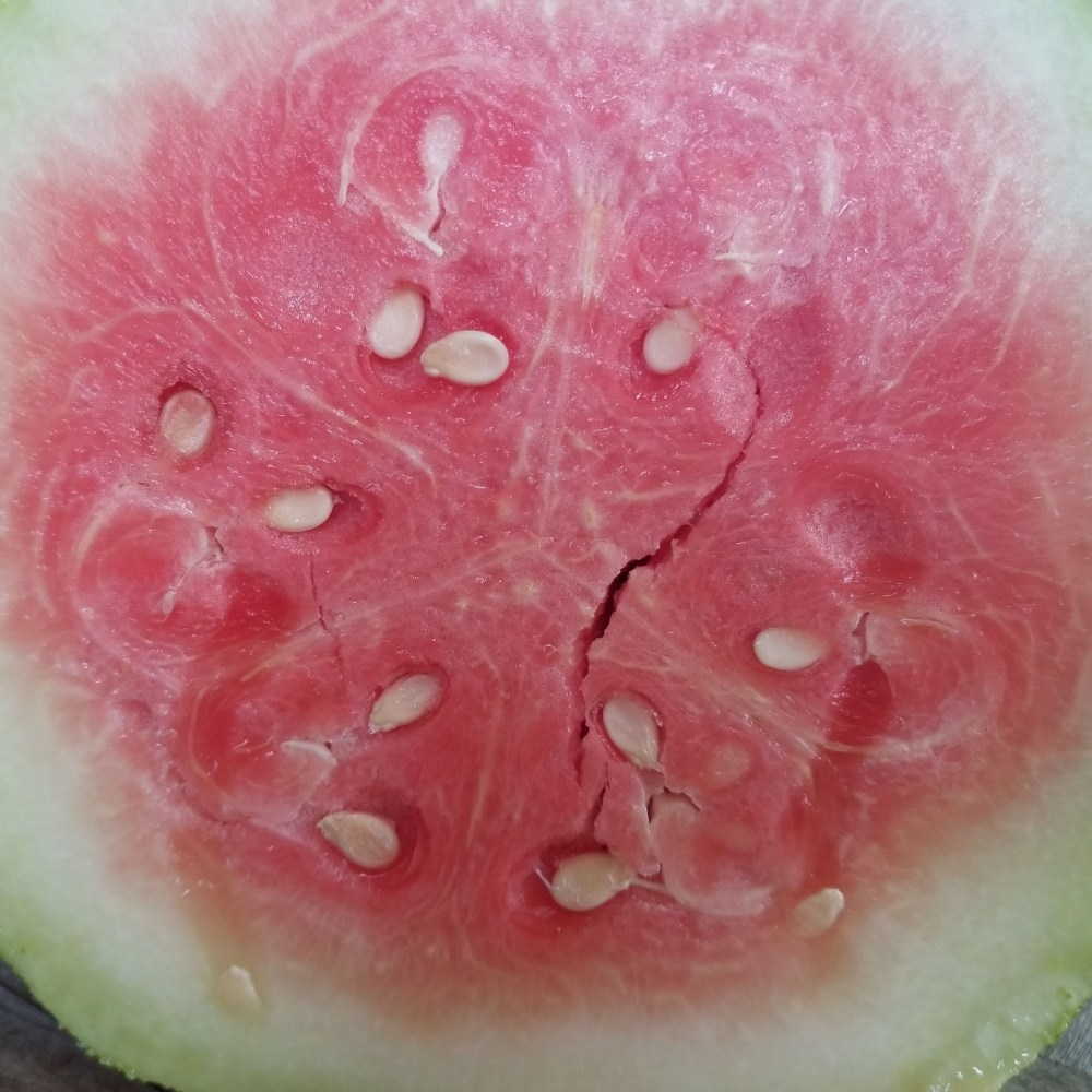 Bradford Family Watermelon - an heirloom