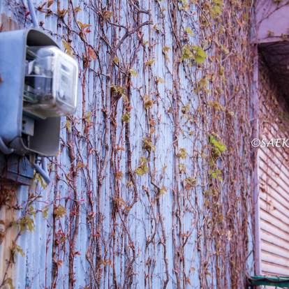 桜満開の「大森ふるさとの浜辺公園」周辺の街並み