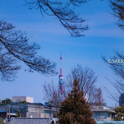 桜満開の青山から眺めた東京タワー