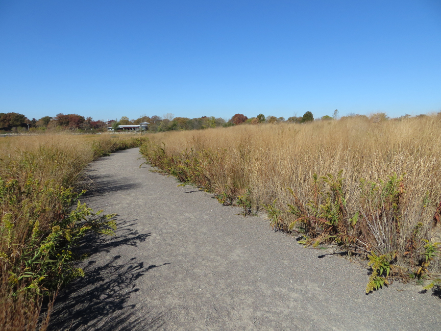 The Salt Marsh Trail is dirt and gravel