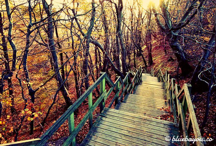 Fotoparade Schönstes Bild: Die Treppen im Herbstwald führen hinab zu den Kreidefelsen Møns Klint auf der Insel Møn in Dänemark.