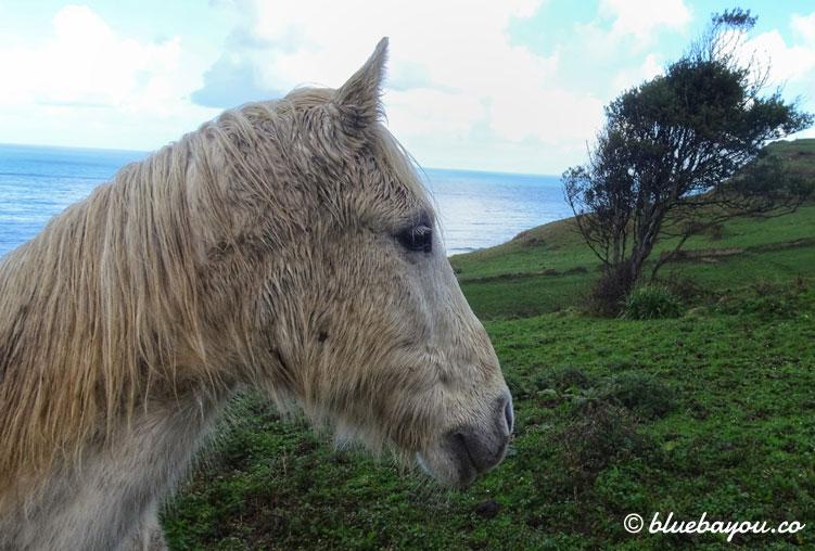 Ein als Einhorn getarntes Pferd auf dem Camino del Norte.