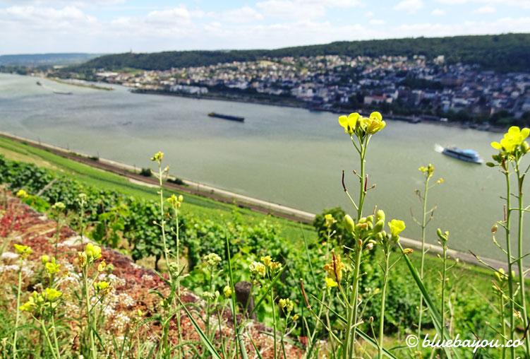 Blick aus den Weinbergen zwischen Rüdesheim und Assmannshausen auf Bingen und den Rhein.